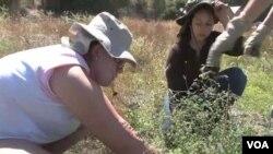 Các học sinh của tiểu bang California, Mỹ tham gia bảo vệ môi trường trên đảo Santa Cruz