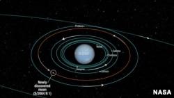 El diagrama presentado por la NASA muestra la órbita de varias lunas de Neptuno.