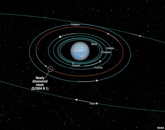 This diagram provided by NASA shows the orbits of several moons located close to the planet Neptune. The new moon, Neptune's tiniest, is designated S/2004 N 1.