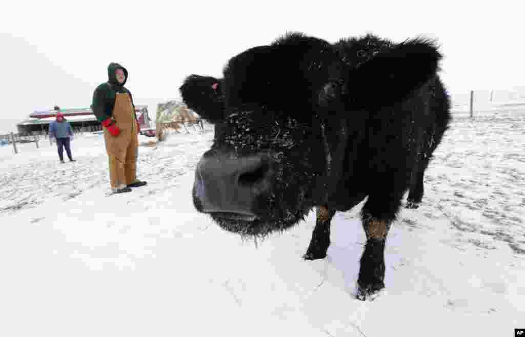 Isabella and Zadok Graff check on their family's beef cattle during freezing temperatures in Middletown, Illinois, Jan. 7, 2014.