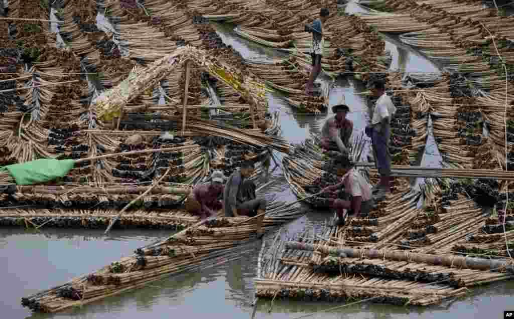 Người dân sống bằng nghề tre trong bang Rakhine, Miến Điện.