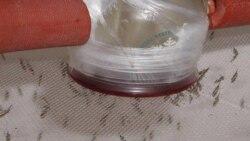 تاکید سازمان بهداشت جهانی بر ادامه تلاش ها برای ریشه کنی بیماری مالاریا