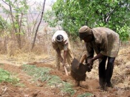 Cameroonian farmers tilling the soil.