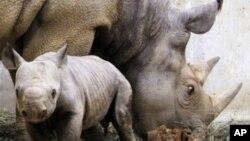 Les braconniers ciblent notamment les rhinocéros et les éléphants (Photo AP)