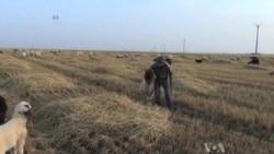 Food Crisis Grips War-Torn Syria