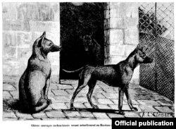 Ảnh vẽ 3 chó Phú Quốc ở Thảo Cầm Viên Paris (trong báo 'La Nature' số 21-02-1891)