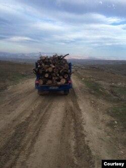 İran Azərbaycanında meşə ağacı qaçaqçılığı artıb