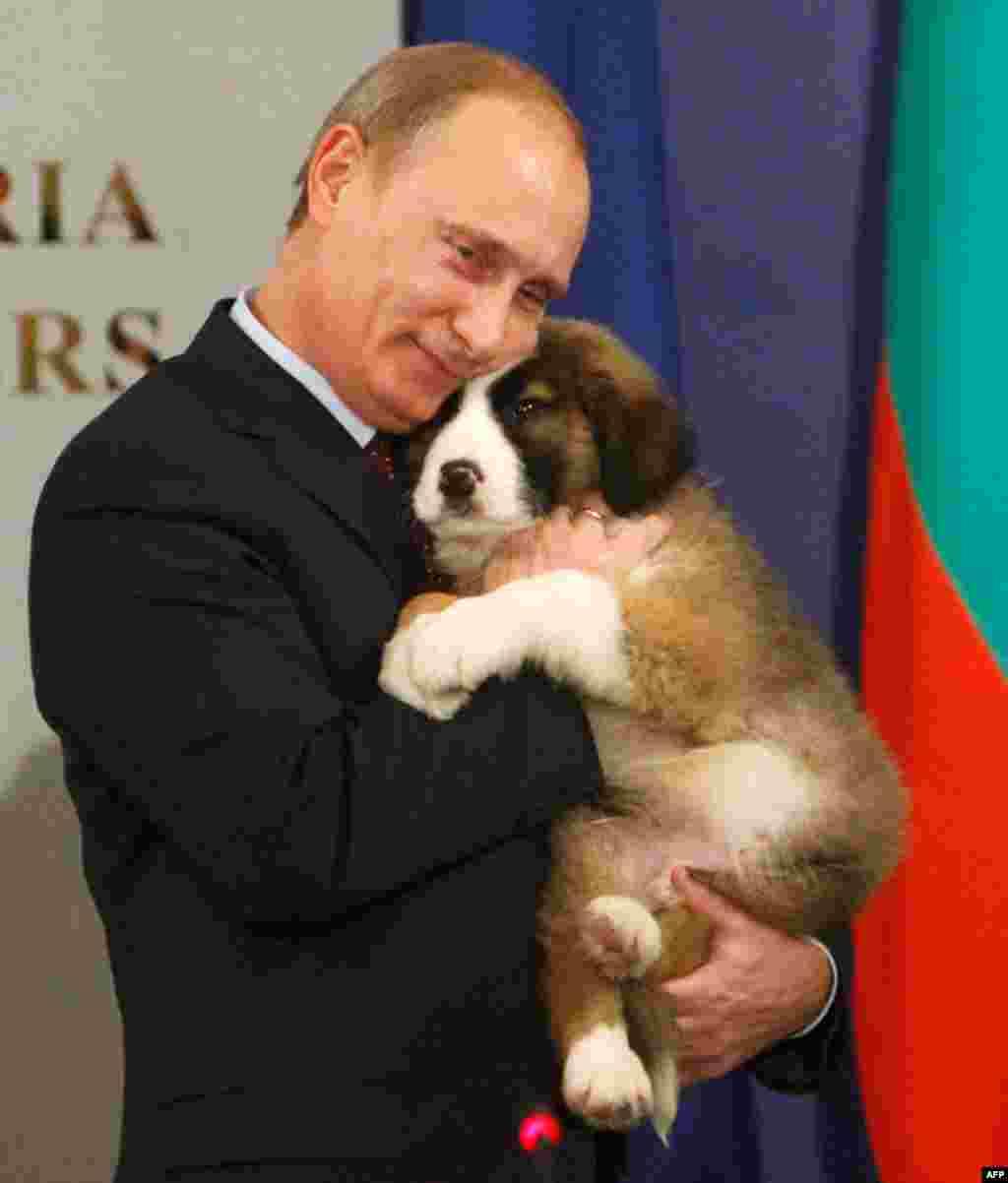 Владимир Путин обнимает щенка болгарской овчарки - подарок премьер-министра Болгарии Бойко Борисова. 13 ноября 2010 г.