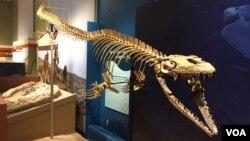 Fosil hewan laut yang ditemukan di tebing jurang di Angola.