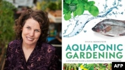 Hydroponic gardener and author Sylvia Bernstein discovered she could use the waste water from fish to grow organic vegetables and fruits.