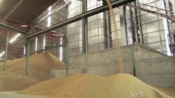 Rice Payment Scheme Threatens Thailand's Status as World's Top Exporter
