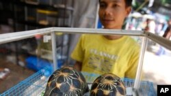 FILE - Radiated tortoises, originally a native species of southern Madagascar, are on display during an annual flora and fauna expo in Jakarta, Indonesia.