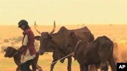非洲部份地區長期面臨乾旱。
