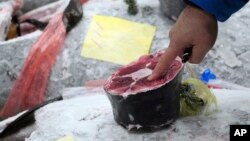Seorang calon pembeli memeriksa kualitas ikan tuna beku sebelum berlangsungnya lelang pertama awal tahun di pasar Toyosu Market yang baru dibuka, lokasi pasar ikan baru di Tokyo, 5 Januari 2019.