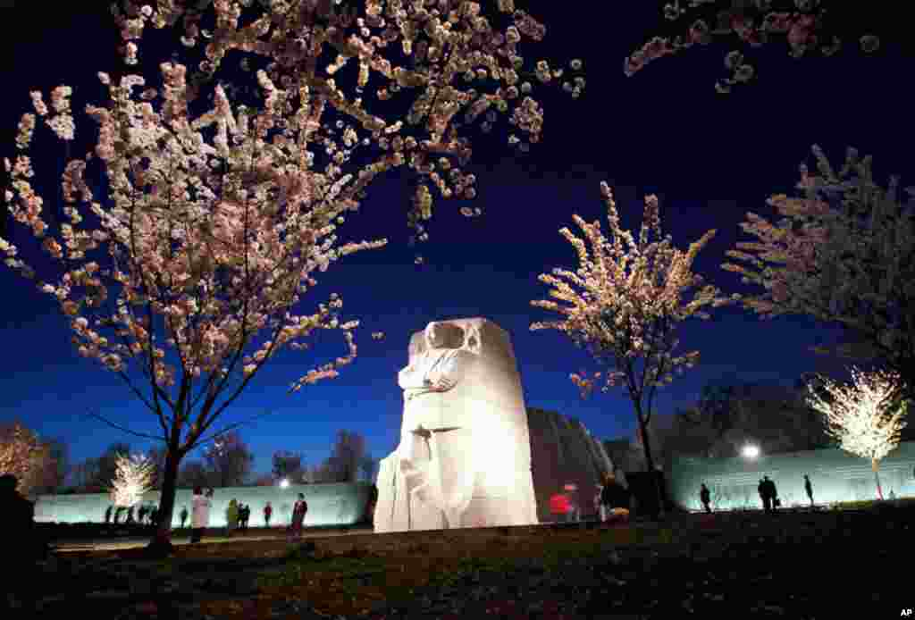 Cherry blossom trees bloom after sunset at the Martin Luther King, Jr. Memorial along the Tidal Basin in Washington, March 22, 2012. (AP)