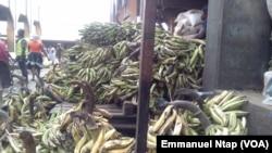 Les plantains destinés pour le marché de Libreville au Gabon sont stockés au marché Mfoundi, à Yaoundé, Cameroun, 20 février 2017. (VOA/Emmanuel Ntap).