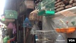 نمایی از بازار پرنده گان در شهر جلال آباد