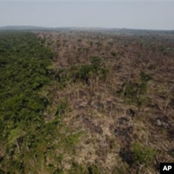 An illegally burnt deforested area is seen next to a still virgin forest, near Novo Progresso, in the northern Brazilian state of Para, 15 Sep 2009