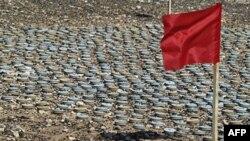 Lá cờ đỏ báo hiệu sự nguy hiểm cắm bên cạnh mìn được quân đội Libya đào lên và chuẩn bị tiêu hủy trong chiến dịch dọn quang năm 2008