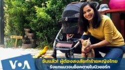 จับแล้วผู้ต้องสงสัยรุมทำร้ายหญิงไทย รังแกแมวจนช็อคตายในนิวยอร์ก