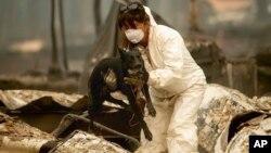 """Članica tima za pretragu i spasavanje, koja traži žrtve požara """"Kemp"""" nosi psa po imenu Suzi Kju u razorenom gradiću Peradajz, u Kalifroniji (Foto: AP/Noah Berger)"""
