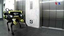 4 ayaqlı robot