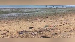 Poluição mata peixes da Ilha de Moçambique