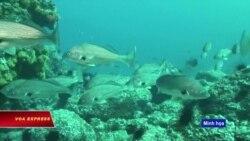 Việt Nam, Trung Quốc thả cá ở vịnh Bắc Bộ