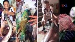 'Cá yêu nước' bắt ở biển Đông đắt khách ở Trung Quốc