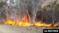 Trees are engulfed in flames as a bushfire spreads in Adaminaby, New South Wales, Australia, January 9, 2020, in this still image from a video obtained from Ingleside Rural Fire Service. Ingleside Rural Fire Service/via REUTERS THIS IMAGE HAS BEEN…