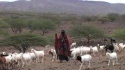游牧社区在改变中寻求生存之道