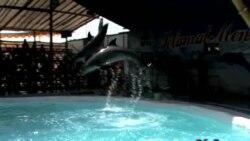 İndoneziyanın səyyar sirkində canlı delfinlər çıxış edir