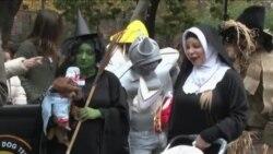 Парад собак в хэллоуинских костюмах в Нью-Йорке