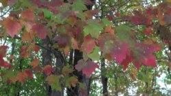 首都华盛顿的秋天绚丽多彩