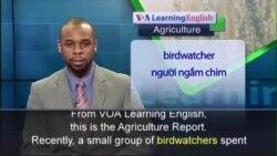 Anh ngữ đặc biệt: Climate Change Affecting Bird Migration (VOA)