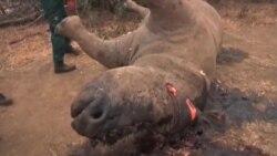 Južna Afrika: Dronovi bi mogli pomoći u zaustavljanju krivolovstva