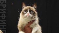 Угрюмый кот заработал своей хозяйке почти 100 миллионов долларов