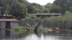 俄羅斯遠東遭遇大洪災
