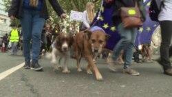 CIENCIA/SALUD: Conciencia animal para proteger salud y bienestar de los animales