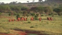 Skup u Keniji o zaštiti slonova