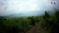 Mozambikdə qəhvə istehsalı ilə ətraf mühitin mühafizısi bir-birinə calaşdırılıb