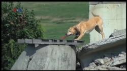 Anjing SAR Penyelamat Korban Bencana