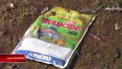Nông nghiệp 'nghiện' thuốc và hoá chất