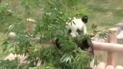 中國大熊貓抵達首爾受禮遇