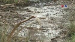 VN thiệt hại nặng vì các con đập đang giết chết sông Mekong