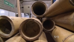 Testing Bamboo as Building Material