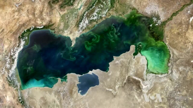 Seeing Microscopic Creatures from Space