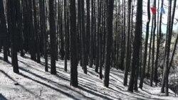 Шумата над Будинарци претворена во безживотен пустош