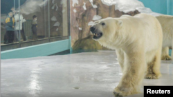 A polar bear is seen inside an enclosure inside a hotel at a newly-opened polarland-themed park in Harbin, capital of northeast China's Heilongjiang province March 12, 2021.