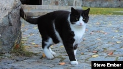 Kucing yang sangat bersahabat ini mendekati sahabat barunya, seorang pelancong yang membawa kamera